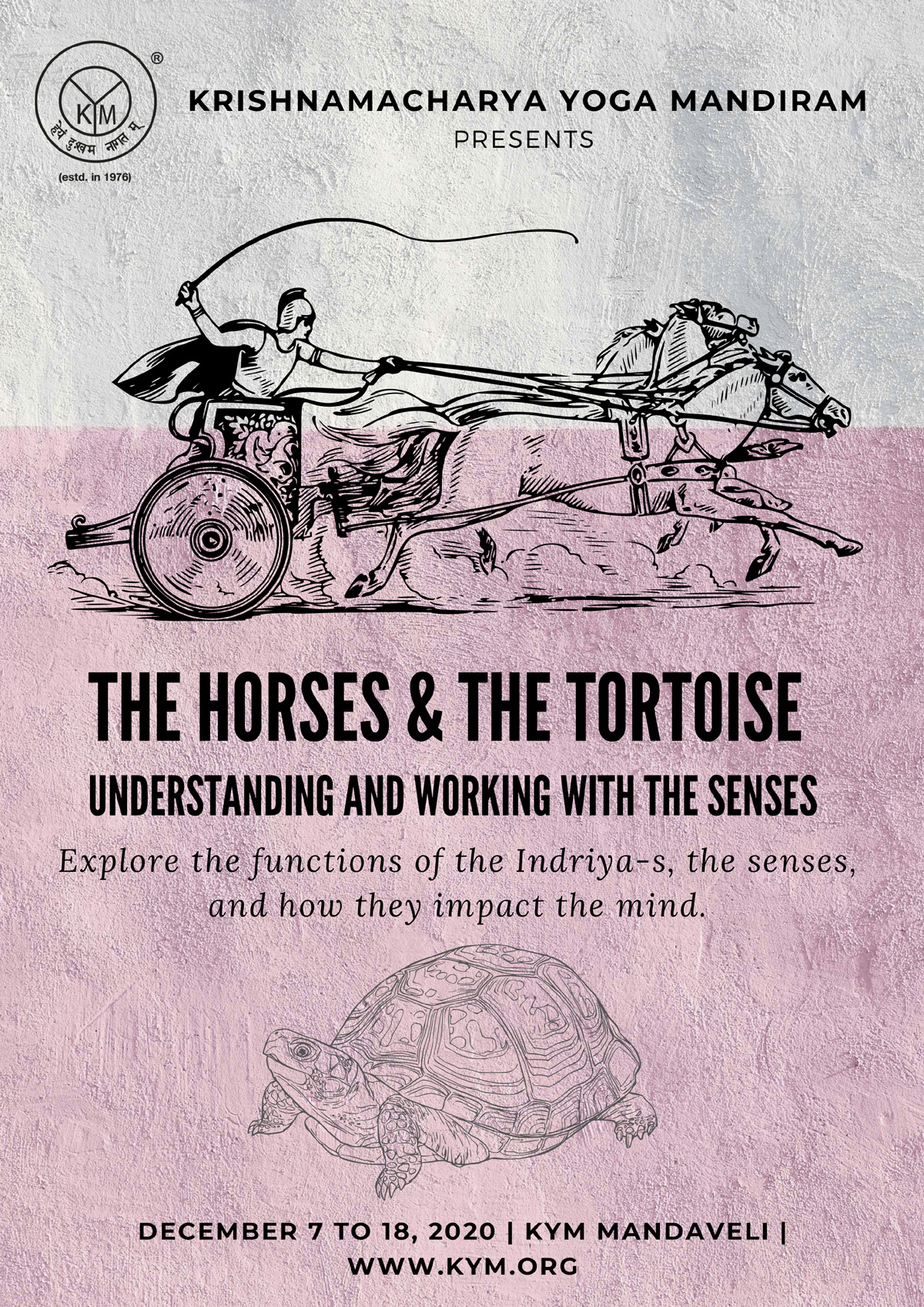 The Horses and the Tortoise | Understanding and Working with the Senses